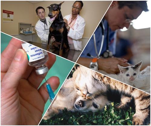 Titeren, homeopathie voor dieren